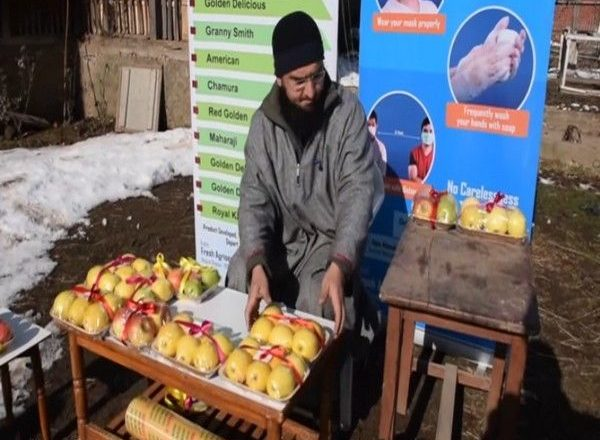 J&K: Young entrepreneur sells Kashmiri apples online, introduces new packaging